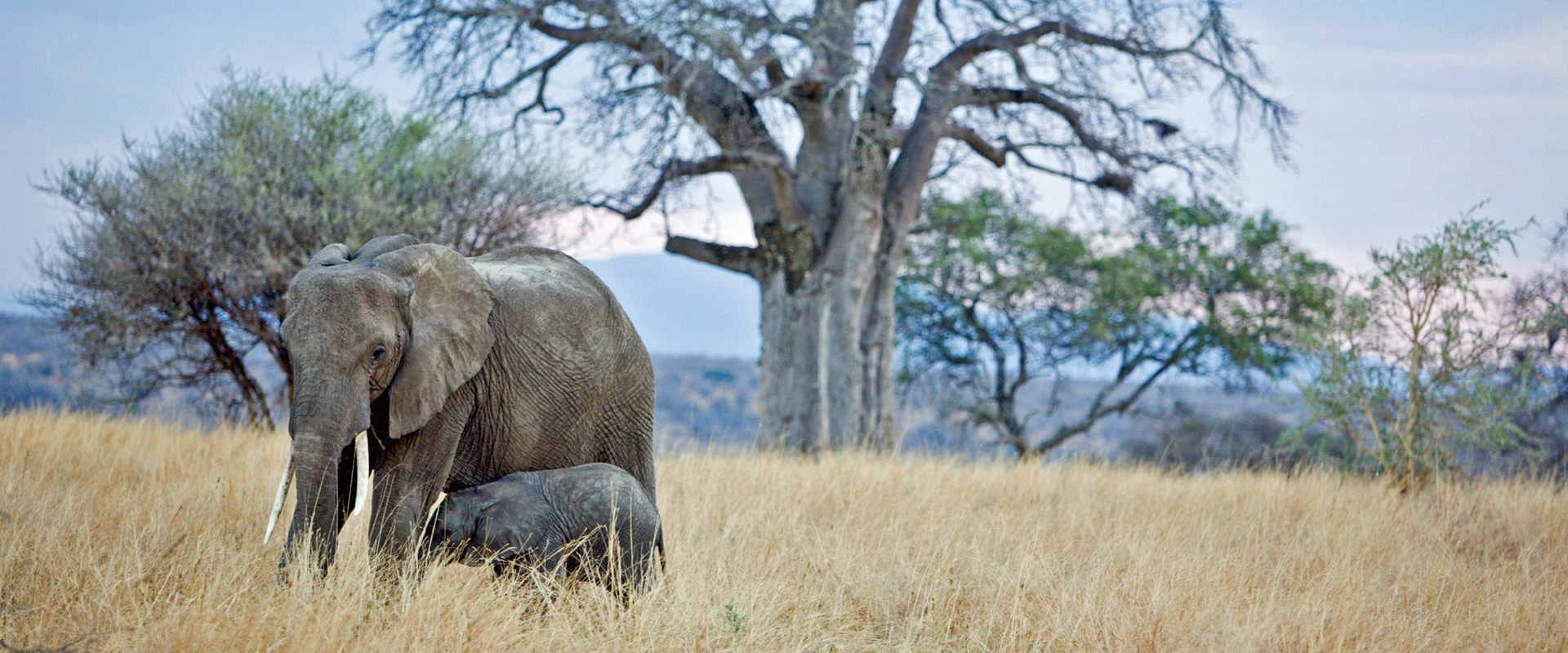 18 Days Tanzania Combined Safari
