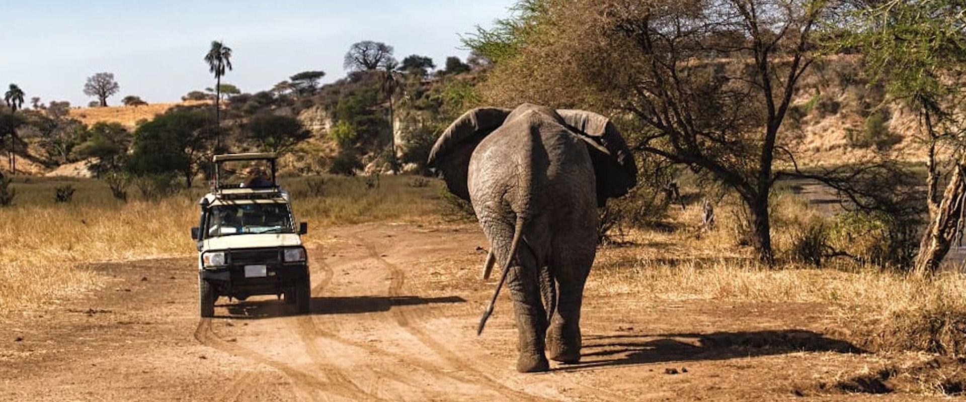 4 days tanzania southern safari
