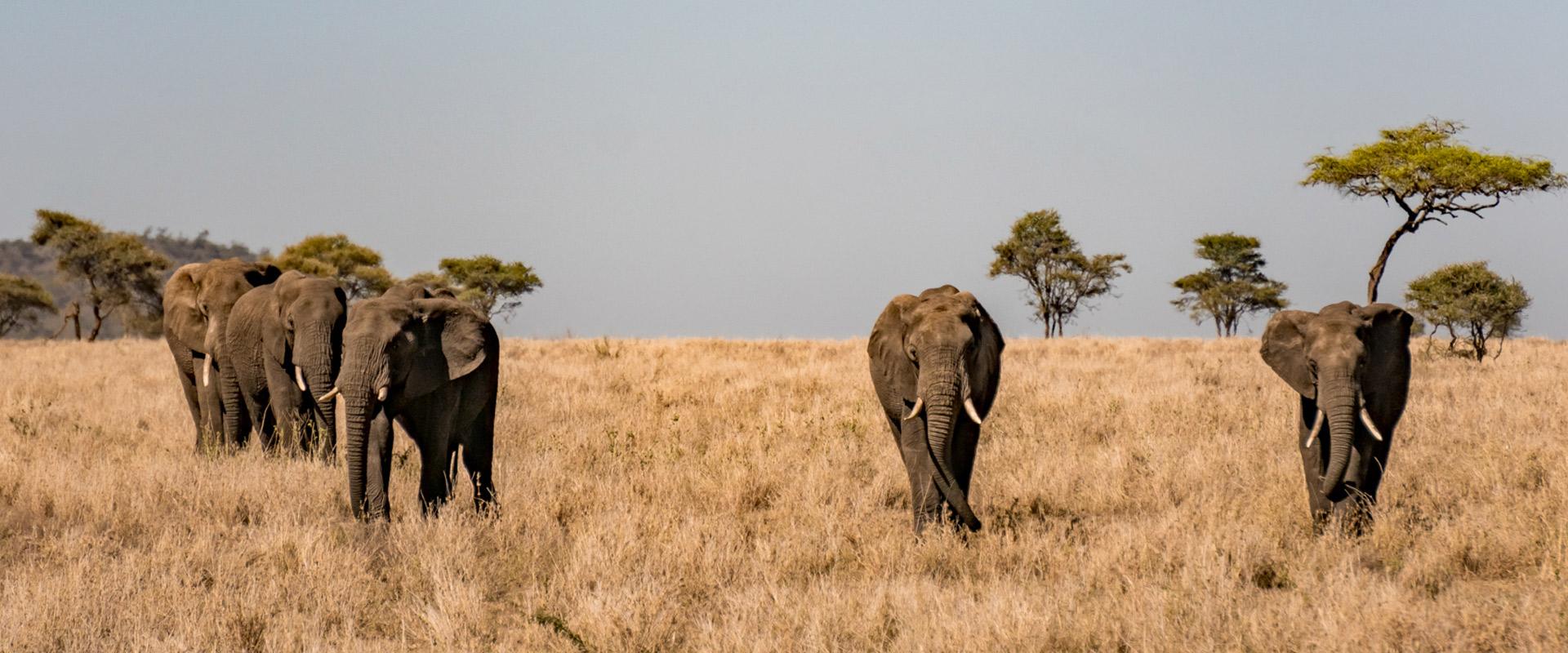 6 days tanzania southern safari