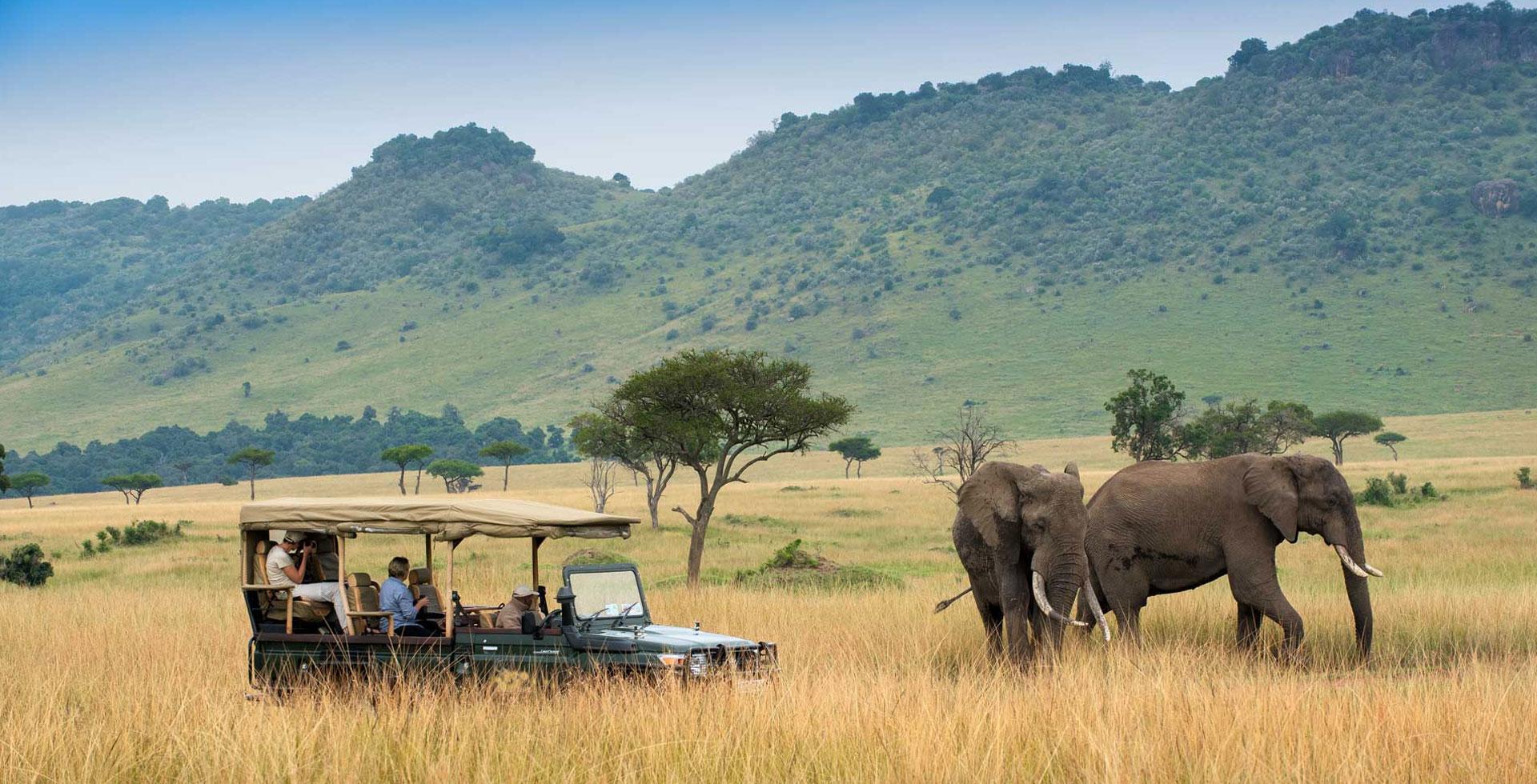 African Pangolin Safaris
