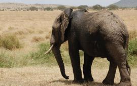 Tanzania Safari FAQs
