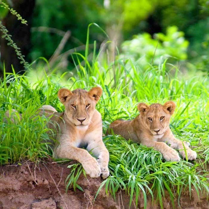 4 days tanzania safari to ruaha