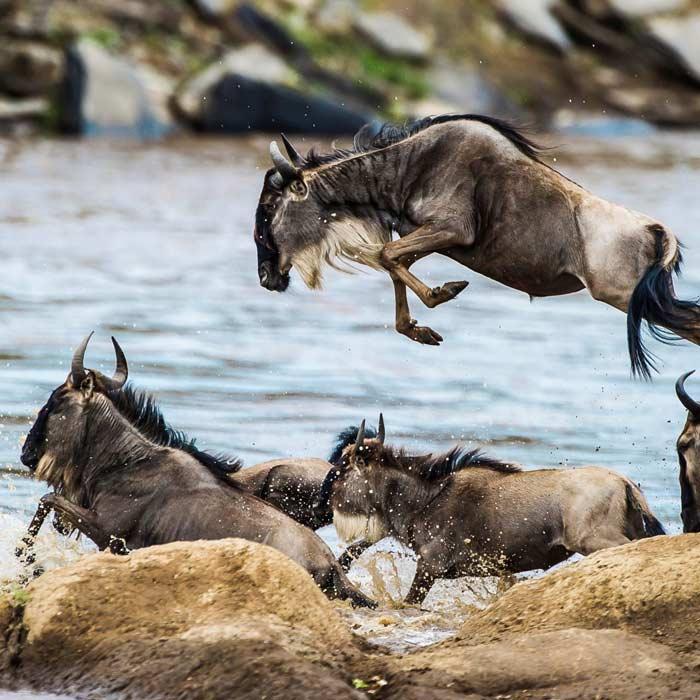 7 Days Wildebeest Migration Safari