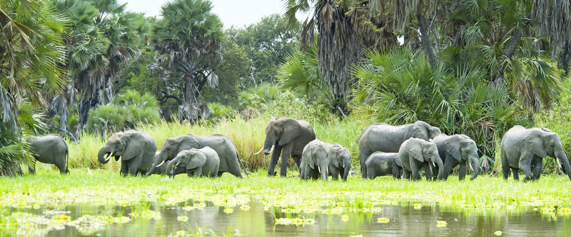 Nyerere National Park