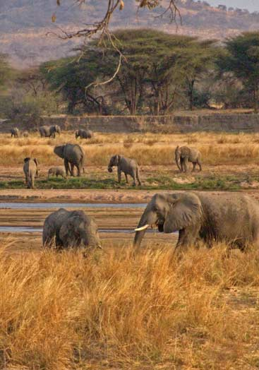 6 days tanzania southern safari to ruaha