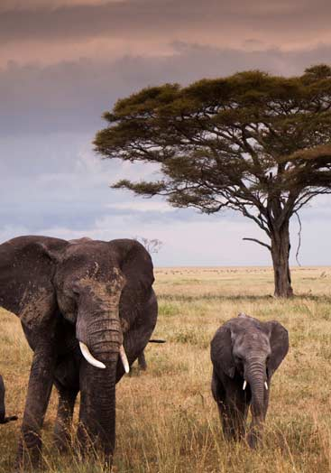 7 days tanzania northern safari