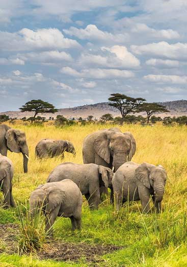 18 Days Tanzania Combined Safari