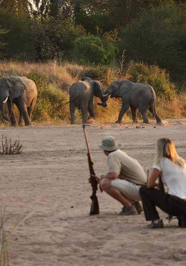 4 days tanzania safari to ruaha