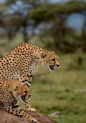 5 days tanzania northern safari