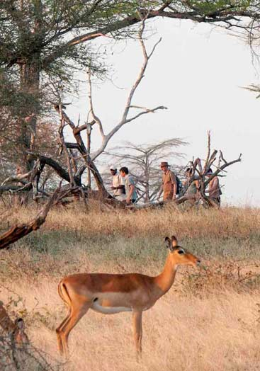 5 Days Tanzania Safari to Nyerere National Park and Kilwa
